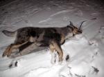 Dead Dog 'Buddy'