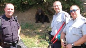The Mounties pose with the Black Bears found guarding illegal pot farm...