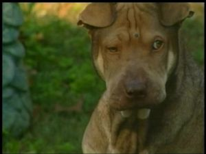 Wrinkles the dog shot twice in the head,and lives!!!