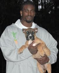 Convicted dog fighter...comeback story of the year!