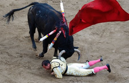 A Tortured Bull Fighting For It's Life
