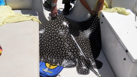 Giant Eagle ray jumped on women in boat