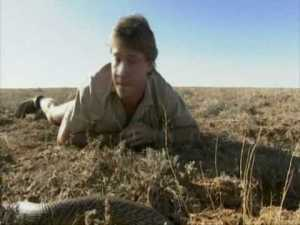 Steve Irwin and a deadly venomous snake