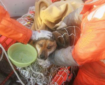 Tsunami dog rescued at sea
