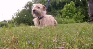 Mason the miracle tornado dog