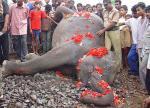 Dead rampaging elephant