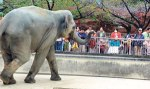 Elephants and crowds do not mix