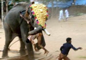 Killer indian elephants sometimes kill!!!