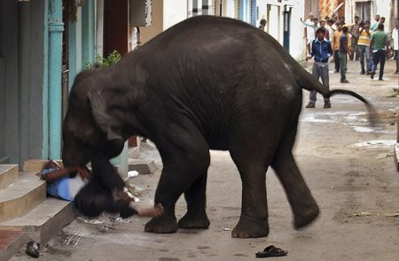 Security guard Renuka Swamy, 55,trampled to death by wild rampaging elephant in Mysore,India on Wednesday