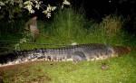 21 foot giant croc captured in the Phillipines