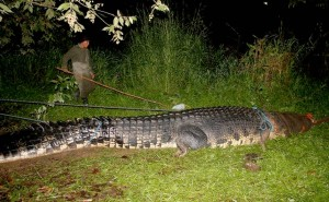 21 foot giant croc captured in the Phillipines