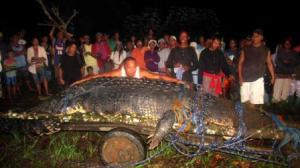 Captured giant croc